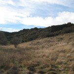 Wildwood Canyon 2