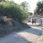 QuigleyCanyon_horses