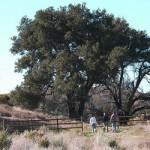 East Walker Ranch