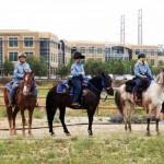 horses_trail
