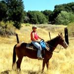 Equestrians1