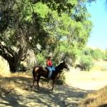 Equestrians2